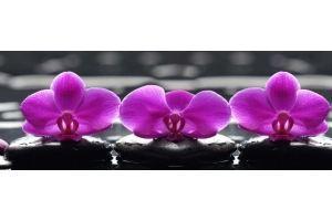 Фартук кухонный Цветы 1.14 - Оптовый поставщик комплектующих «Алмаз»