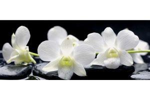 Фартук кухонный Цветы 1.18 - Оптовый поставщик комплектующих «Алмаз»