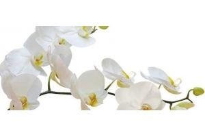 Фартук кухонный Цветы 1.33 - Оптовый поставщик комплектующих «Алмаз»