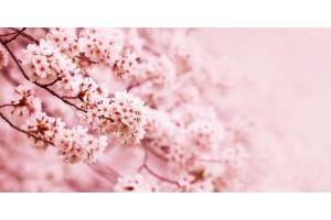 Фартук кухонный Цветы 1.43 - Оптовый поставщик комплектующих «Алмаз»