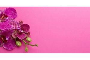 Фартук кухонный Цветы 1.45 - Оптовый поставщик комплектующих «Алмаз»