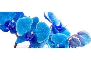 Фартук кухонный Цветы 1.35 - Оптовый поставщик комплектующих «Алмаз»
