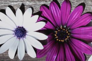 Фасад фотопечать цветы - Оптовый поставщик комплектующих «Хамелеон»