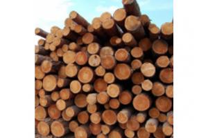 Кругляк хвойных пород - Оптовый поставщик комплектующих «Ивановская лесопромышленная компания»