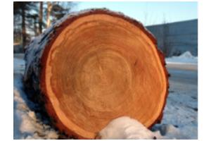 Лес кругляк Лиственница - Оптовый поставщик комплектующих «Олимп»