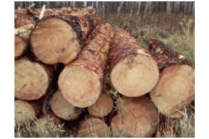 Лес кругляк Сосна - Оптовый поставщик комплектующих «Олимп»