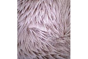 Мебельная ткань Фейерверк милк - Оптовый поставщик комплектующих «Фестиваль»