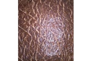 Мебельная ткань Стони беж - Оптовый поставщик комплектующих «Фестиваль»