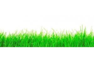 Панель ПВХ кухонная Трава - Оптовый поставщик комплектующих «Пластмаркет»