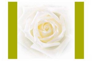Велюр Купоны Цветы Бонита Вайт 2 - Оптовый поставщик комплектующих «Текстиль Плюс»